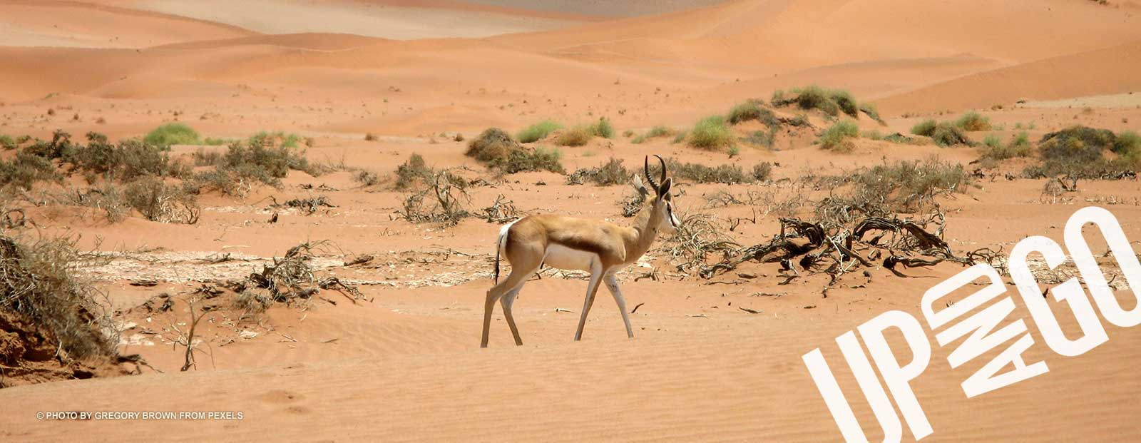 Upandgo Accommodation Namibia African Safari Wildlife
